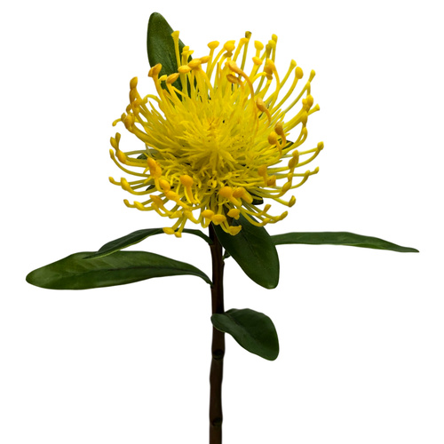 Pincushion Protea - 42.5cm / Yellow