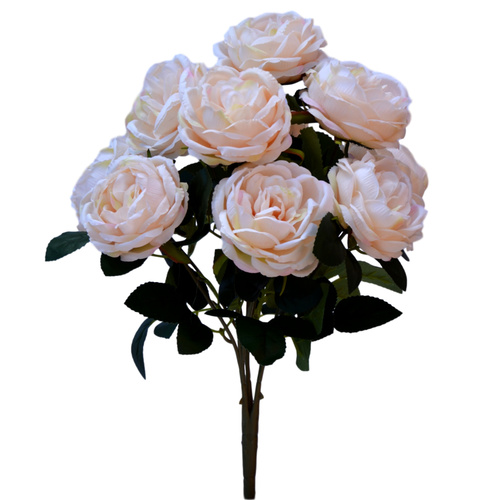 CABBAGE ROSE BUSH x 10 - 44cm / CREAM