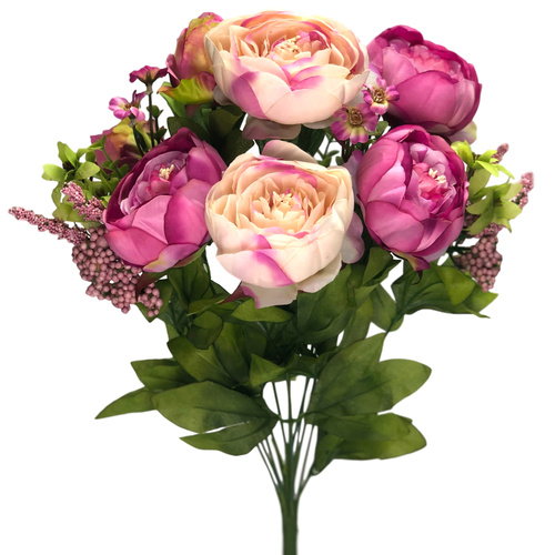CABBAGE ROSE BUSH x 12 - 50cm - PINK/CREAM