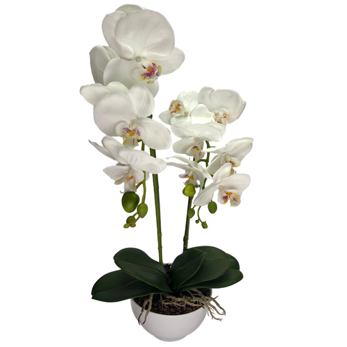 POTTED ORCHID x 2 - 50cm / WHITE
