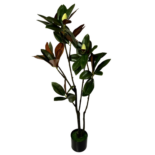 Potted Magnolia Tree - 120cmH